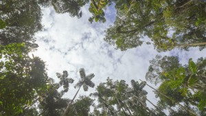 rainforest gap sky image