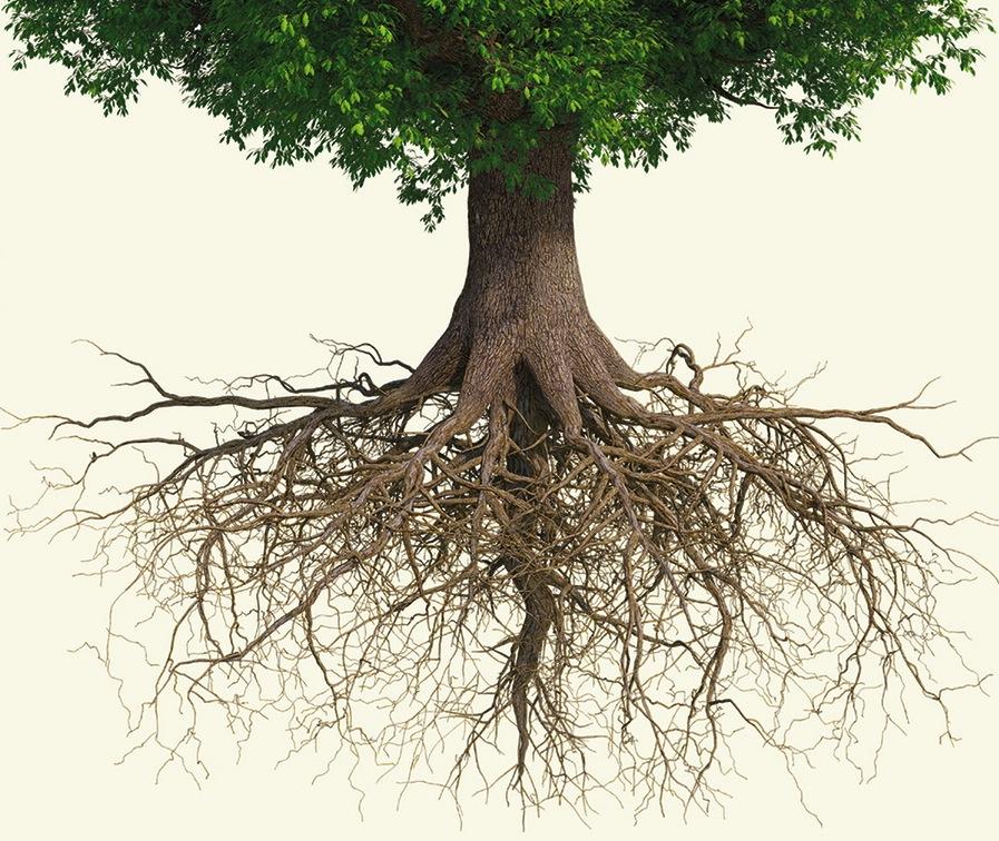 минус, деревья с корнями фото красивые стильные